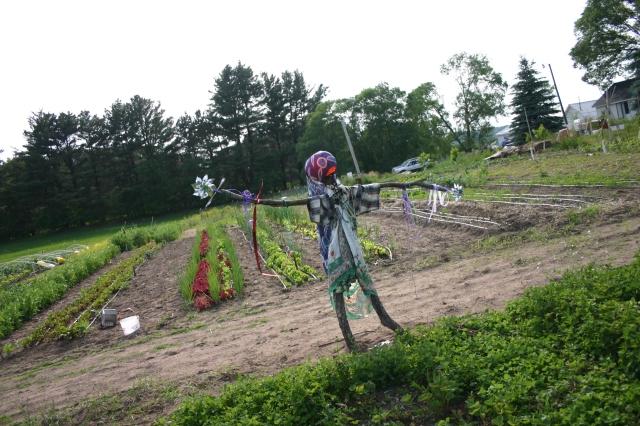 Native Scarecrow